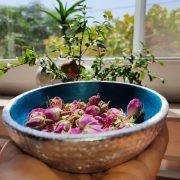 طریقه خشک کردن غنچه گل محمدی